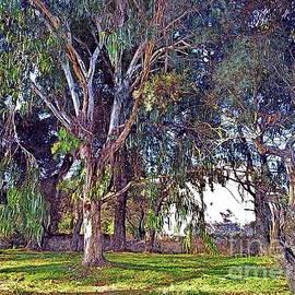 Eucalyptus trees, Lefkada, paint effect  by Paul Boizot