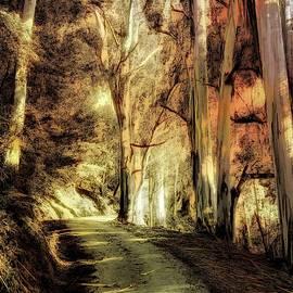 Eucalyptus Wonderland by Christina Ford