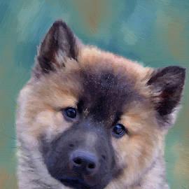 Eurasier Dog Puppy - DWP1324371 by Dean Wittle
