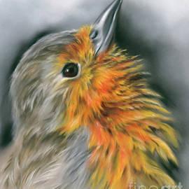 European Robin Facing Skyward by MM Anderson