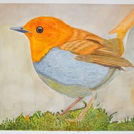 European Robin by Sonali Gangane