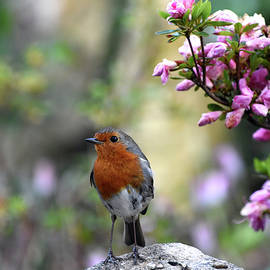 European robin with flowers Poole Dorset England by Loren Dowding