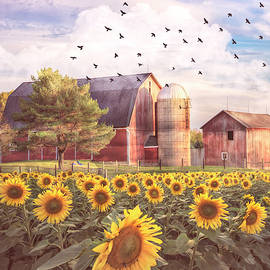 Evening Country Light on the Sunflowers by Debra and Dave Vanderlaan