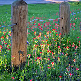 Evening Light on Texas Wildflowers by Lynn Bauer