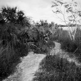 Everglades Lake-3 by Rudy Umans