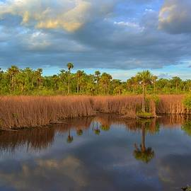Everglades Reflection by Don Columbus
