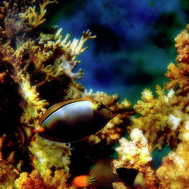 Exciting View In The Red Sea Underwater World by Johanna Hurmerinta