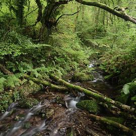 Exmoor Woodland Stream, Hawkscombe