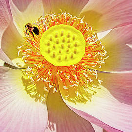 Exotic Lotus by Marcia Colelli