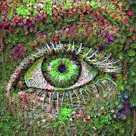 Eye 1a by Stefano Menicagli
