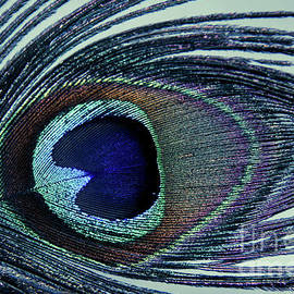 Eye of the Peacock Feather Abstract Photograph Artwork
