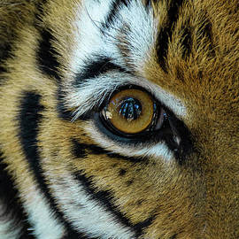 Eye of the Tiger by Noah Young