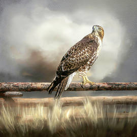 Eye on the Storm by Donna Kennedy