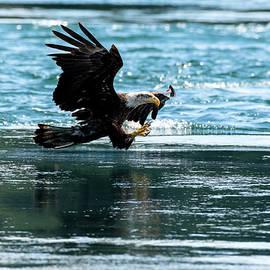 Eyes On The Prize - Eagle Art by Jordan Blackstone