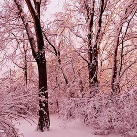 Fabulous Winter Evening by Lyuba Filatova