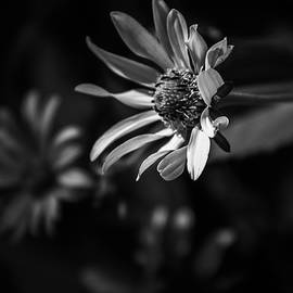Face The Sun - Black and White by Bruce Davis