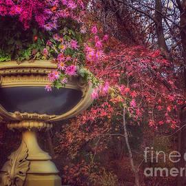 Faded Beauties of Fall - Bow Bridge Central Park New York by Miriam Danar