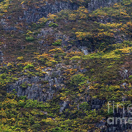 Fagus Trees on Cradle Mountain, Tasmania, Australia by Elaine Teague