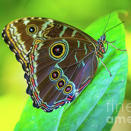 Fair Park Butterfly by Inge Johnsson