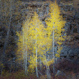 Fall Aspens and Stones by Mike Lee