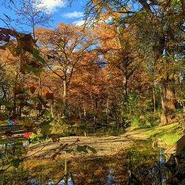Fall at Cypress Creek by Judy Vincent