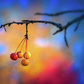 Fall Berries by Carolyn Derstine