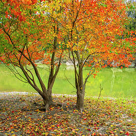 Fall Color at the Creek by Lynn Bauer