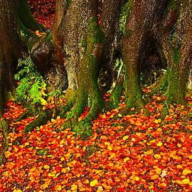 Fall Color Contrast by Loretta S