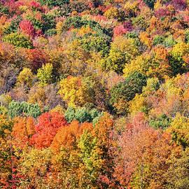 Fall Color Palette by Elvira Peretsman