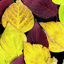 Fall Colors 06 by Philip Rispin