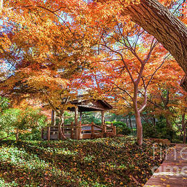 Fall colors at the pavilion by Paul Quinn