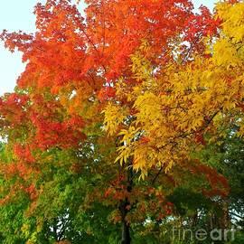 Fall Colors Minnesota by Ann Brown