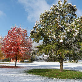 Fall Colors Under Snow by Ben Ford