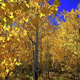 Fall Colors Up Close by Russ Taylor