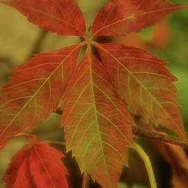 Fall Colour by Dorothy Pinder