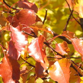 Fall Crab Apple Tree Leaves by Barbara Ebeling