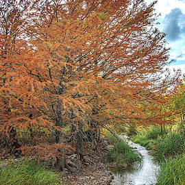 Fall Cypress Trees by the Creek by Lynn Bauer