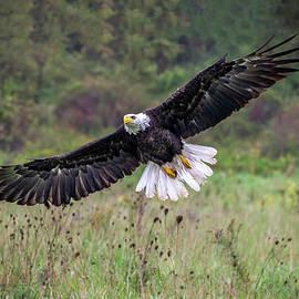 Fall Flight by Anita Hubbard