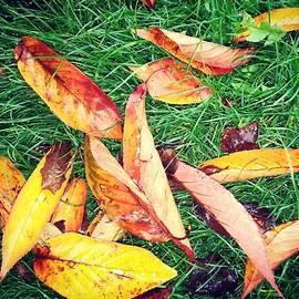 Fall foliage on the lawn by Loretta S