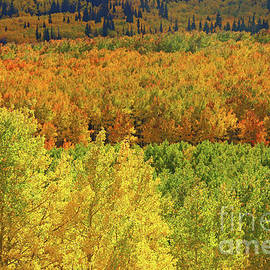 Fall in Guardsman Pass by Marty Fancy