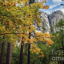 Fall in Yosemite Valley by Sarah Ainsworth