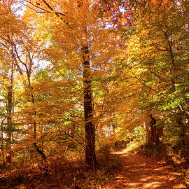 Fall Is In The Air by Denise Harty