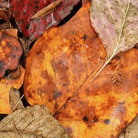 Fall Leaf Still Life #4 by Robert Tubesing