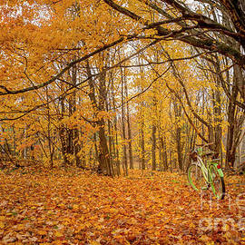 Fall Leaves by Alana Ranney