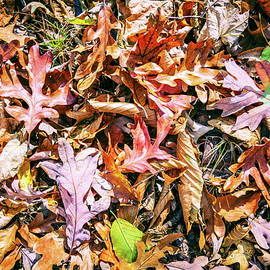 Fall leaves background by Alexey Stiop