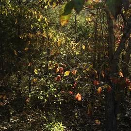Fall Leaves Ozark Mountains