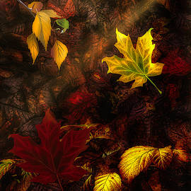 Fall Leaves by Phil Sampson