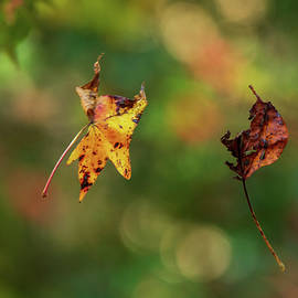 Fall by Mary Ann Artz