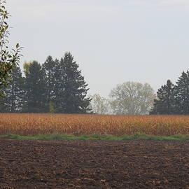 Fall Morning by Barbara Ebeling