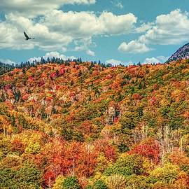 Fall on the Blueridge by Ches Black